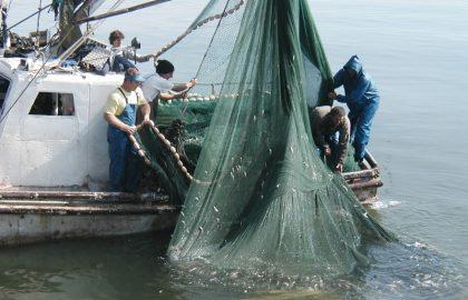 שייט דייג
