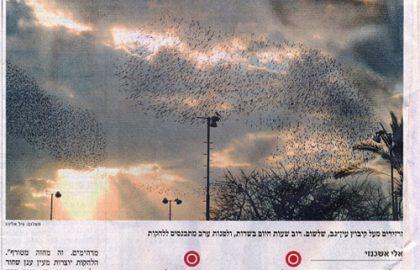 לאחר 20 שנה: הזרזירים שבו לשמי ישראל